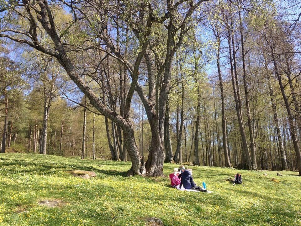 Piknik i Hellaskogen