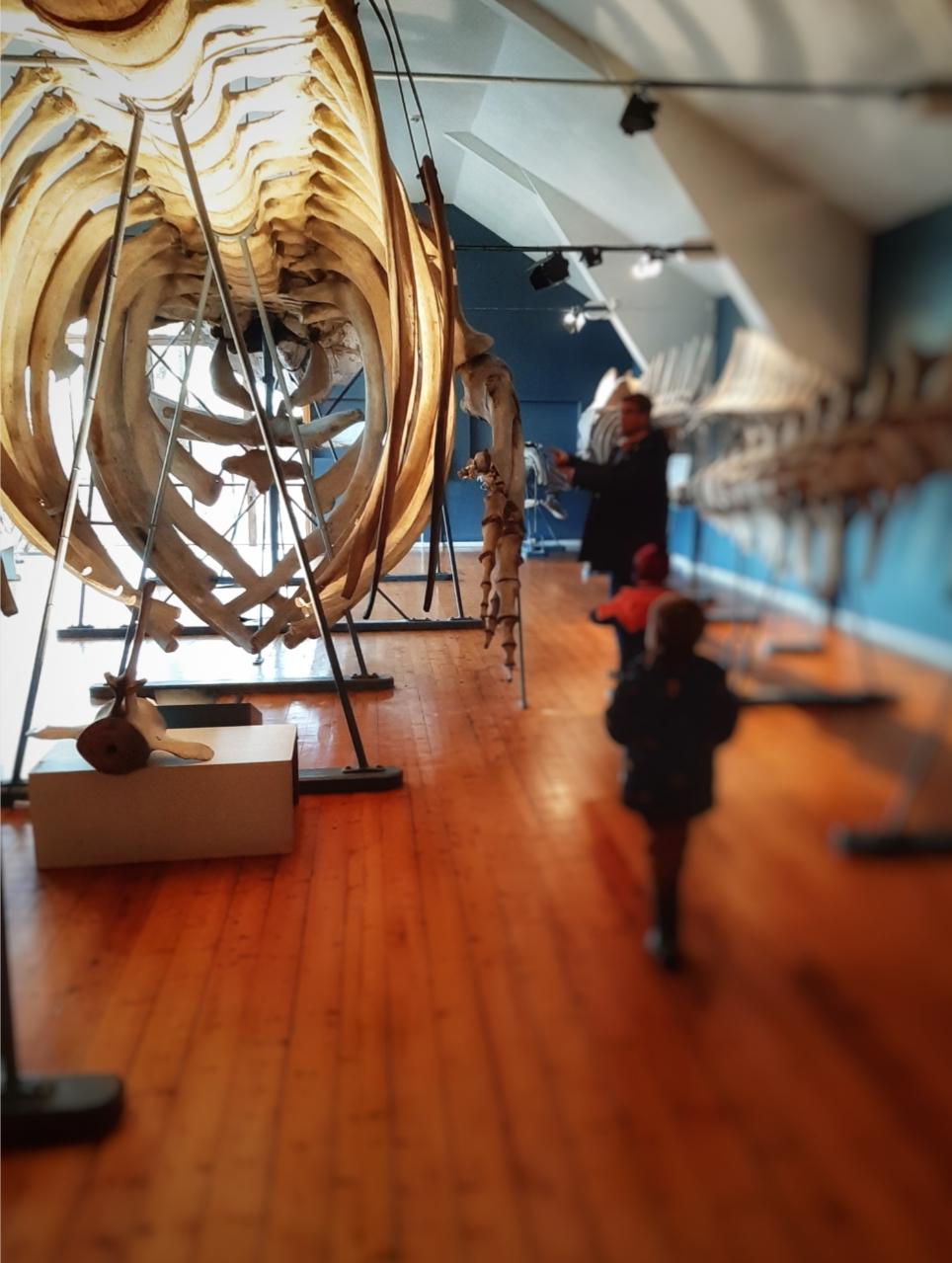 Slottsfjellmuseet